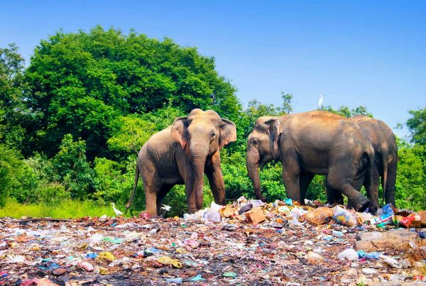 elephants plastic
