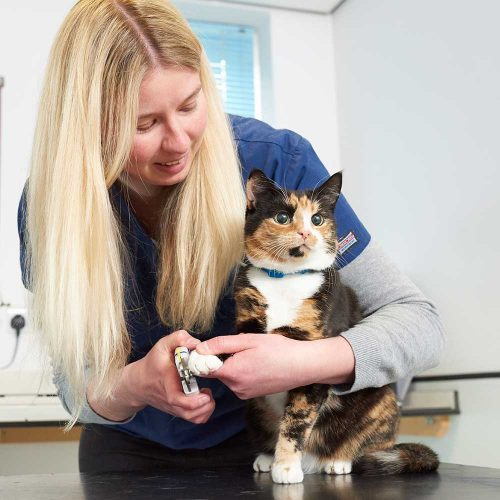 BVA vet and cat